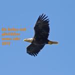 Adler2015